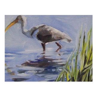 Cartão Postal Íbis no pântano gramíneo