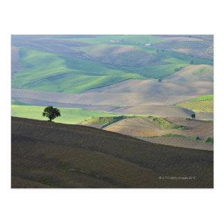 Cartão Postal Ideia aérea da paisagem rural perto de Ronda,