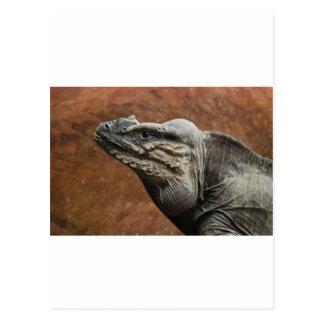 Cartão Postal Iguana do rinoceronte