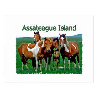 Cartão Postal Ilha de Assateague (família do pônei)