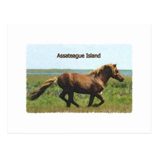 Cartão Postal Ilha de Assateague (logotipo de funcionamento do
