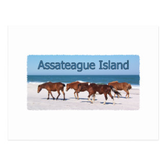 Cartão Postal Ilha de Assateague (pôneis no logotipo da praia)