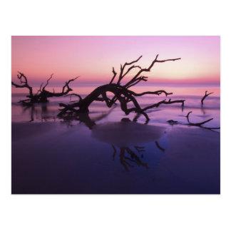 Cartão Postal Ilha de GA Jekyll, cemitério da árvore na praia em