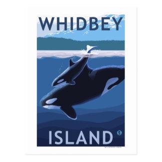 Cartão Postal Ilha, WashingtonOrca e vitela de Whidbey