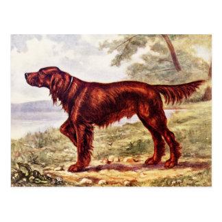 Cartão Postal Ilustração 1900 do setter irlandês do cão