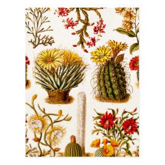 Cartão Postal Ilustração 1911 floral velha da flor do cacto do