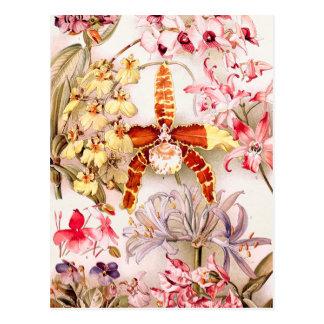 Cartão Postal Ilustração 1911 velha da flor cor-de-rosa da