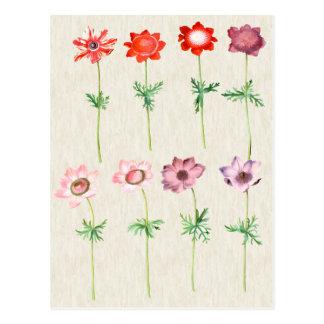 Cartão Postal Ilustração botânica da anêmona do vintage