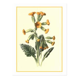 """Cartão Postal Ilustração botânica de """"Cowslip"""""""