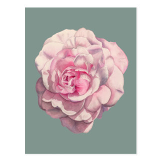 Cartão Postal Ilustração da aguarela do rosa do rosa