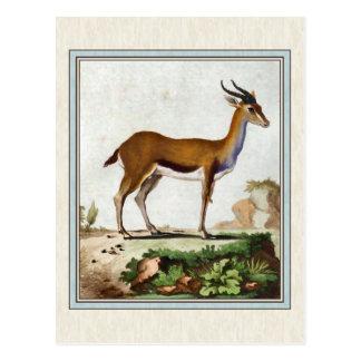 Cartão Postal Ilustração da gazela do vintage