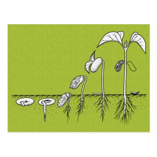 Cartão Postal Ilustração da germinação da planta