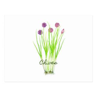 Cartão Postal Ilustração do cebolinho da erva da aguarela