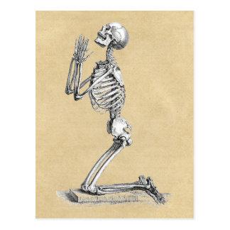 Cartão Postal Ilustração do esqueleto da anatomia