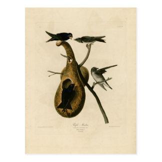 Cartão Postal Ilustração do pássaro de Martin roxo
