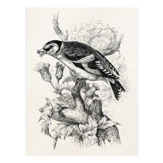 Cartão Postal Ilustração do pássaro do Goldfinch dos 1800s do