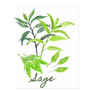 Cartão Postal Ilustração do sábio da erva da aguarela