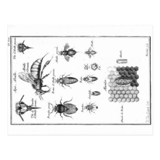 Cartão Postal Ilustração do vintage - abelhas & favo de mel