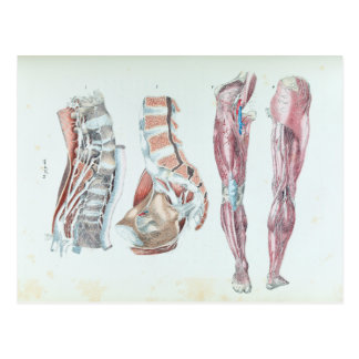 Cartão Postal Ilustração do vintage da anatomia dos pés humanos