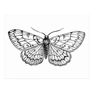 Cartão Postal ilustração do vintage da borboleta