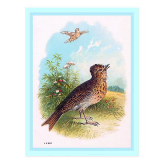 """Cartão Postal """"Ilustração do vintage da cotovia"""""""