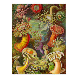 Cartão Postal Ilustração do vintage das anêmonas de mar