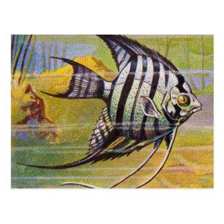 Cartão Postal Ilustração do vintage de um Angelfish