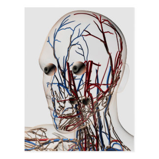 Cartão Postal Ilustração médica das artérias principais 2
