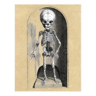 Cartão Postal Ilustração médica de Bidloo (anterior)