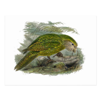 Cartão Postal Ilustração verde do vintage do papagaio do Kakapo