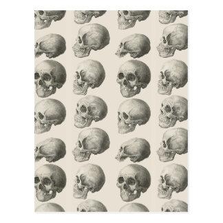 Cartão Postal Ilustrações do crânio do vintage