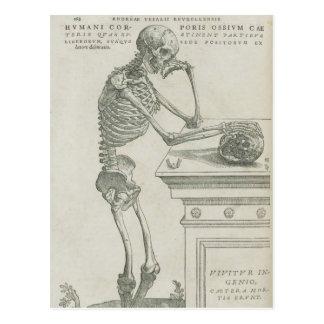 Cartão Postal Imagem esqueletal de Vesalius