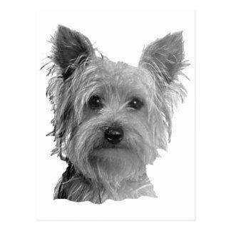 Cartão Postal Imagem estilizado do yorkshire terrier