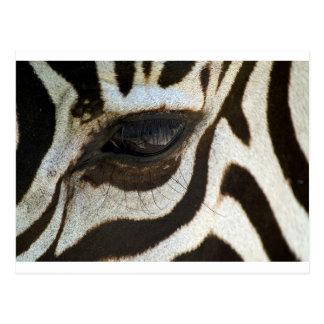 Cartão Postal Imagem sereno bonito do olho da zebra