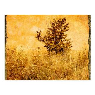 Cartão Postal Imagem velha da paisagem