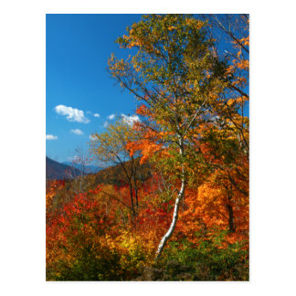 Cartão Postal Imagens do outono