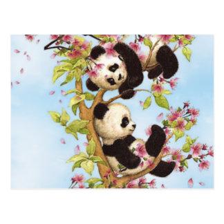 Cartão Postal IMG_7386.PNG bonito e panda colorida projetada