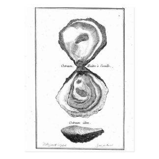 Cartão Postal Impressão animal da ostra do vintage