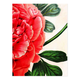 Cartão Postal Impressão botânico