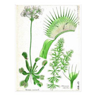 Cartão Postal Impressão da planta carnívora do vintage
