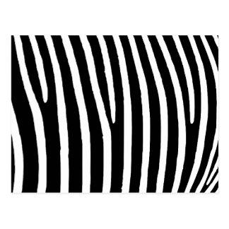 Cartão Postal Impressão da zebra