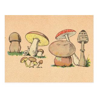Cartão Postal Impressão do cogumelo do vintage