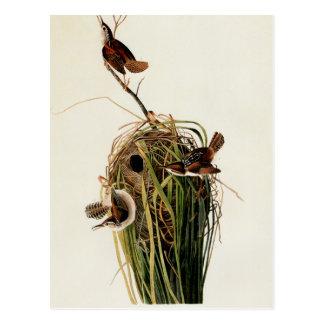 Cartão Postal Impressão do pássaro do vintage da carriça de