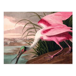 Cartão Postal Impressão do vintage do pássaro do Spoonbill róseo