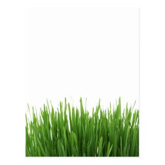 Cartão Postal Impressão verde-claro ensolarado da fotografia da