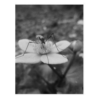 Cartão Postal insektschwarzweiß