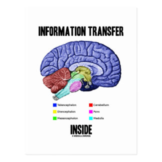 Cartão Postal Interior de transferência de informação (anatomia
