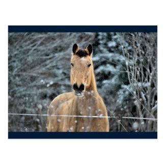 Cartão Postal Inverno do cavalo do Buckskin