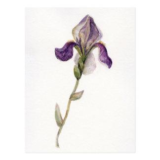 Cartão Postal Íris da violeta da aguarela