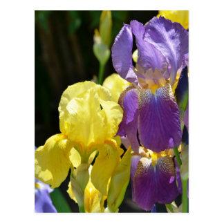 Cartão Postal Íris no primavera